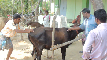Veterinary camp conducted in the village