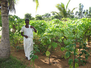 A beneficiary in his vegetable garden