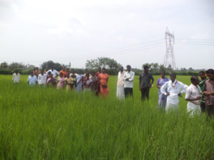 Exposure visit to CIKS experimental farm - Fields of indigenous paddy varieites