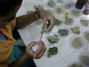 Bioassay on Spodoptera