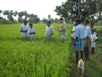 Mr. Vasanth visiting organic paddy field of a beneficiary at Kadambai village