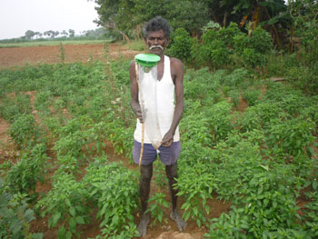 Farmer setting a pheromone trap in his field