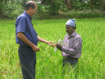 Inspection of seed production