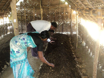 Vermicompost production unit of a beneficiary