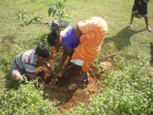 Planting saplings of fruit crops in WADI fields in Jawadhu Hills of Tiruvannamalai District