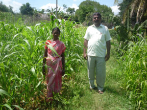 Women beneficiary involved in fodder cultivation